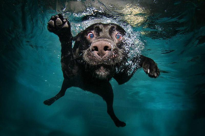 Фотограф животных Seth Casteel